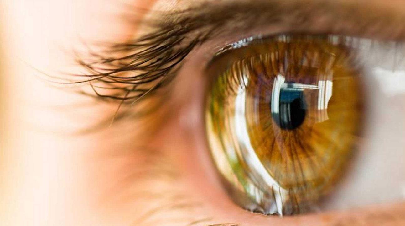 Un ingeniero químico y un oftalmólogo conquistan Harvard en busca de una cura para la ceguera corneal